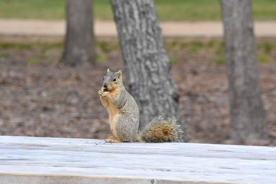 squirrel at the park