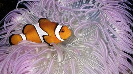 Parc Aquarium Les naiades