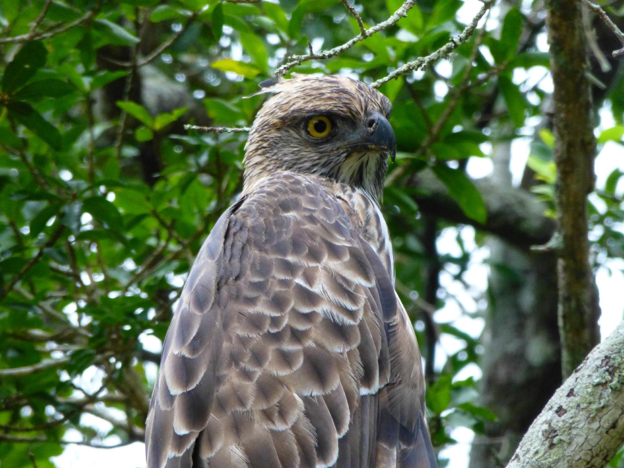 Kulu Safaris Sri Lanka