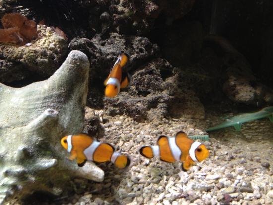 Fort Victoria Marine Aquarium