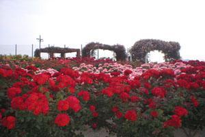 Japanese Rose Garden