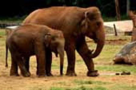 Maharaj Baug and Zoo
