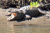 Mangrove Wildlife and Ecology Cruise