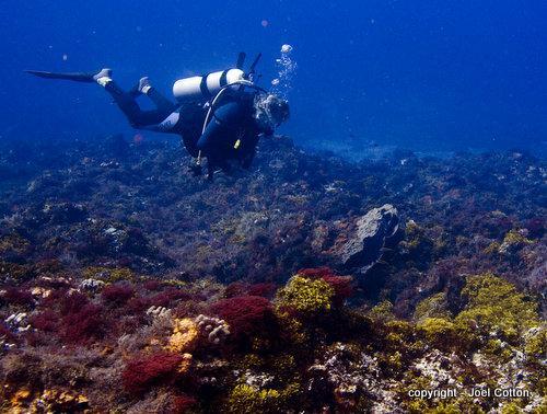 San Juan Reef