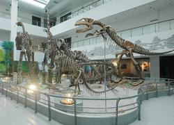 中國地質大學博物館