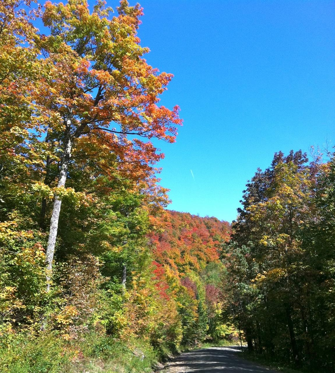 Roxbury Gap in Foliage