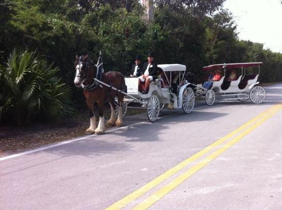 Island horse drawn carriages Islamorada fl