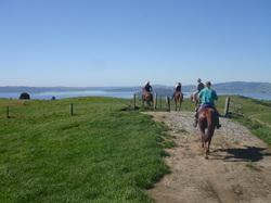 Kiwi Stylz Horse Treks