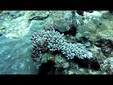 Eco Divers Tours