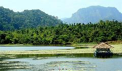 Siburan Rain Forest
