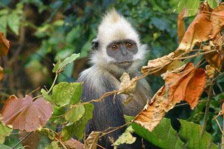 Nongguan White-headed Langur Ecological Park