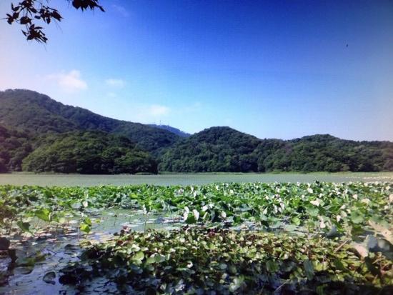 Oyama Kamiike Pond