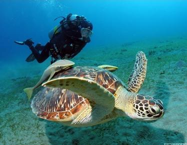 Aqua Adventures by Scuba Dive Sosua