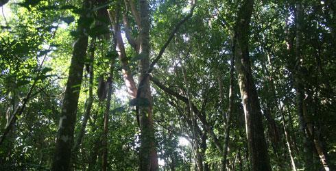 Rio Bravo Forest Reserve
