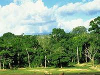 Bamingui-Bangoran Park