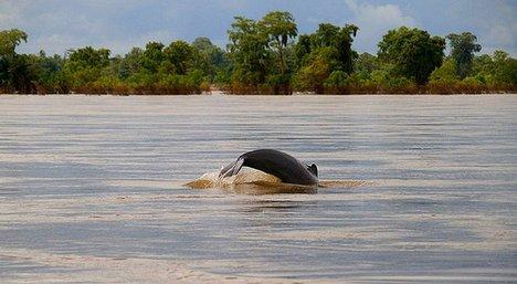 铜陵淡水豚保护区