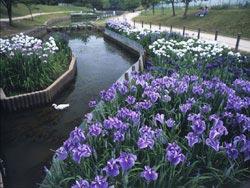 Shirasagi Park