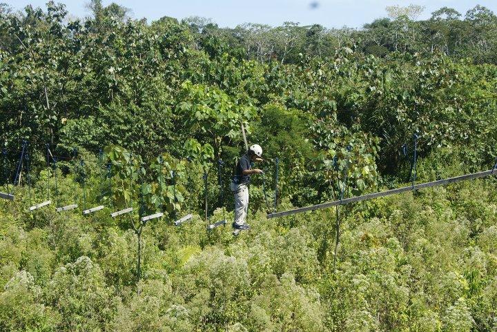 Ecoaventuras Amazonicas
