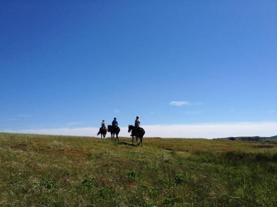Centre equestre La criniere au vent