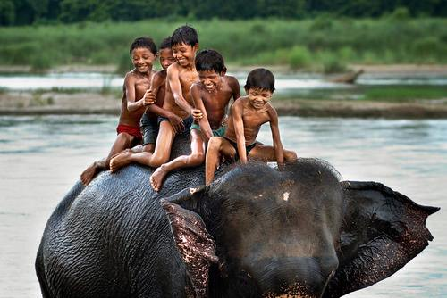 Discover India With Us - Elephant Experience