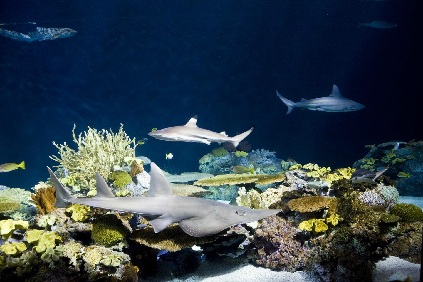 Shedd Aquarium Chicago Il Top Tips Before You Go