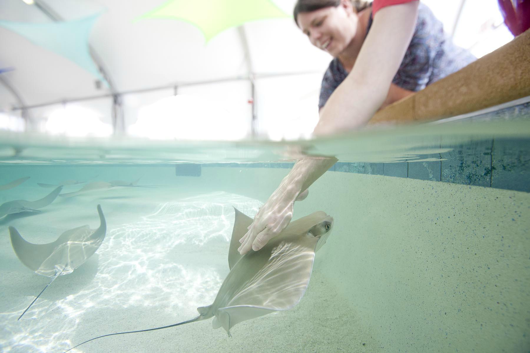 Shedd Aquarium Chicago Top Tips Before You Go
