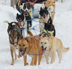 Nature's Kennel Sled Dog Racing and Adventures