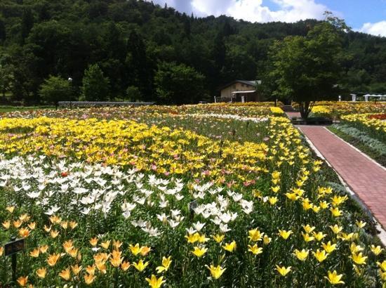 Iide Dondendaira Lily Garden