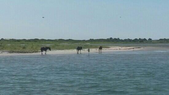 Assateague Adventure
