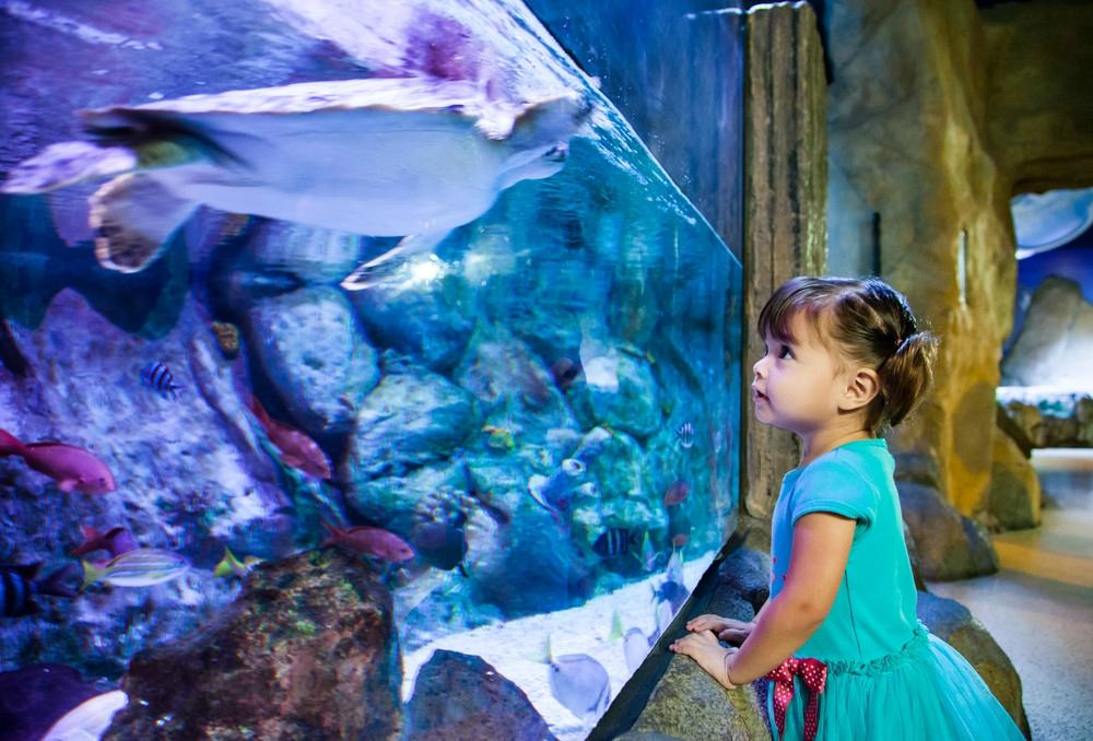 Sea Life Arizona Tempe Top Tips Before You Go With