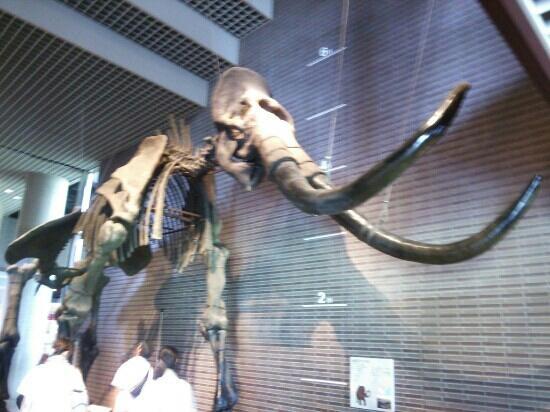 Museum Alam Ibaraki