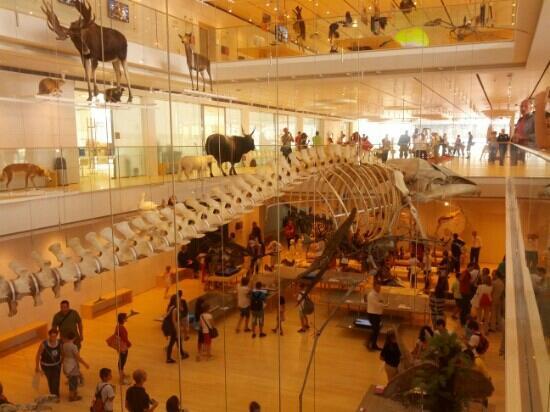 MuSe - Museo delle Scienze