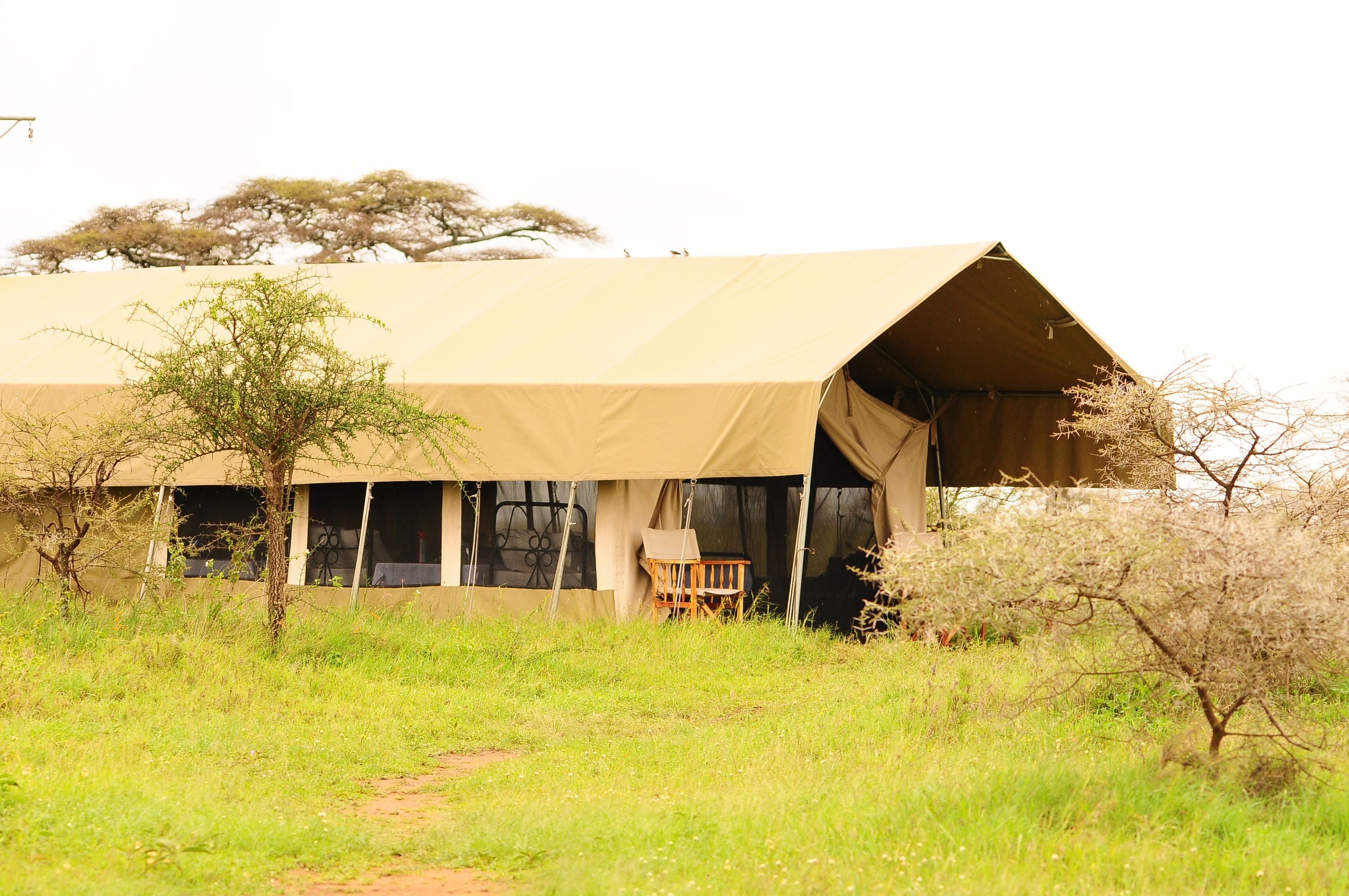 Serengeti Savannah Camps