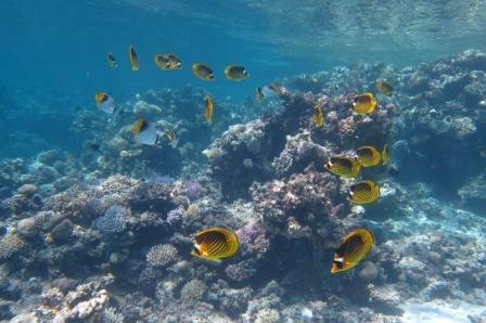 Penguin Divers Dahab