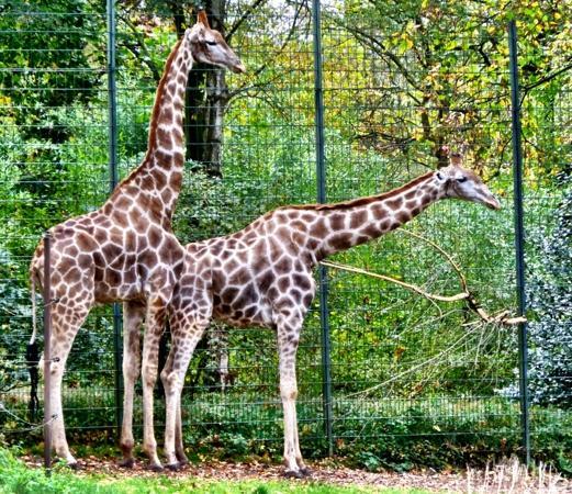 Dortmund Zoo