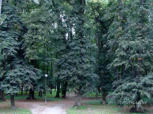 Park Kopernika