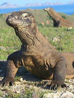 Komodo Mega Tours - Day Tours