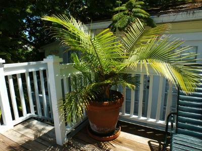 Garden House Key West Maximpepcom