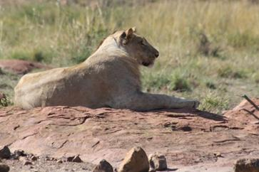 Ama-Zing Pilanesberg Safari Private Day Tour