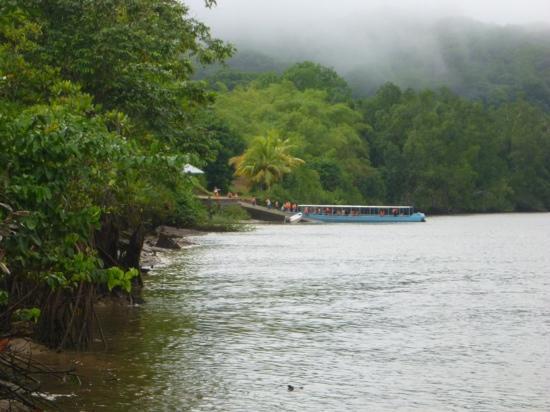 Amazonie Decouverte