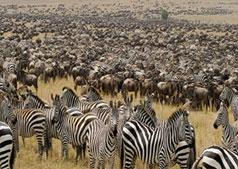 African Safari Destinations Ltd