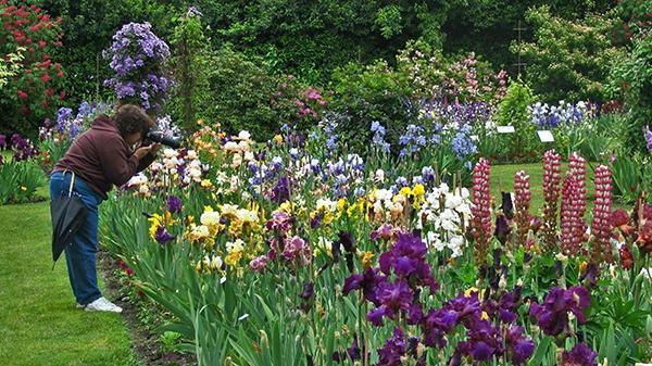Schreiner 39 S Iris Gardens Salem Or Top Tips Before You