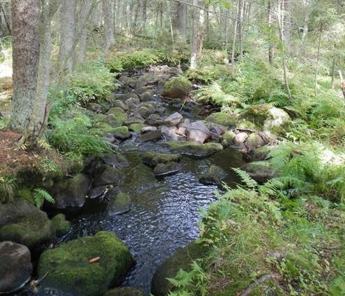 Aurinko Ilves Trail