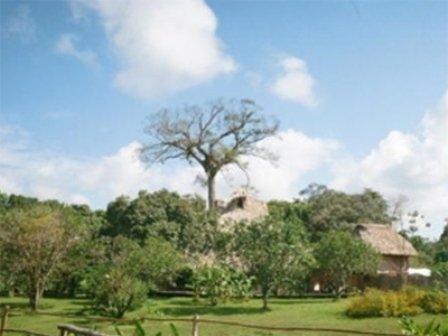 Cotton Tree Lodge