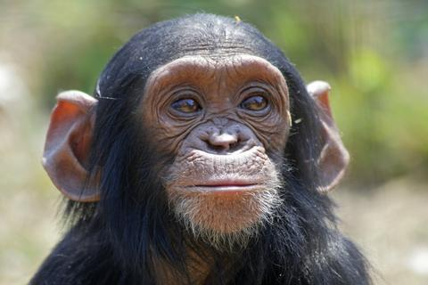 Cheeky Monkey Safaris - Day Tours