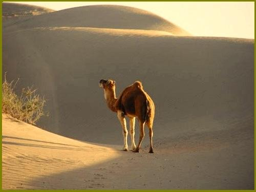 Destino Marruecos - Day Tours