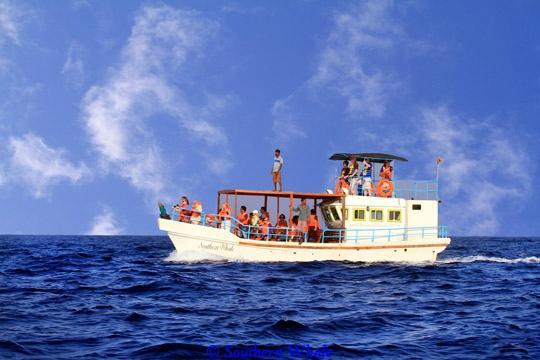 Southern Whale Mirissa