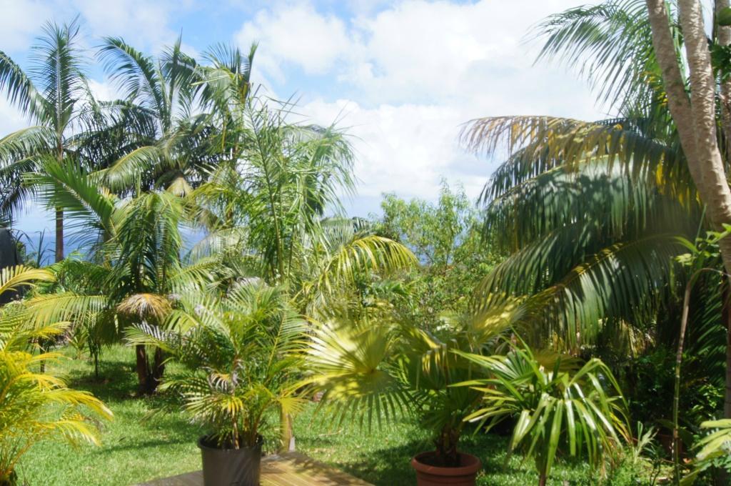 palmier 97400