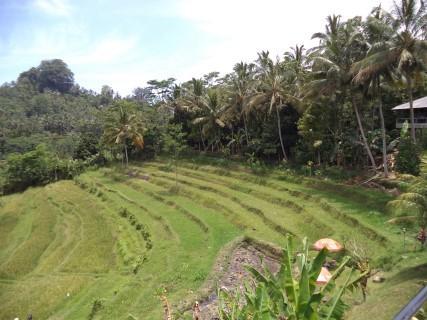 Bali Best Ways