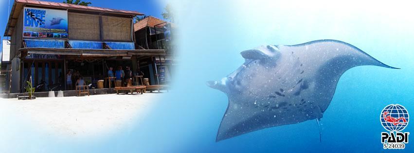 Lembongan Reef Dive